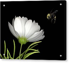 Cosmo And Bee Acrylic Print by Sandi F Hutchins