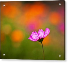Cosmo Pastels Acrylic Print by Mike Reid