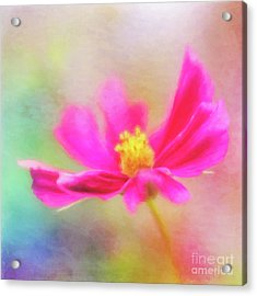 Cosmos Flowers Love To Dance Acrylic Print
