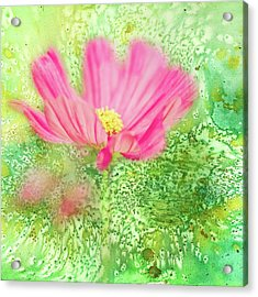 Cosmos On Green Acrylic Print