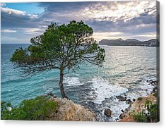 Acrylic Print featuring the photograph Costa De La Calma Tree by Hans- Juergen Leschmann