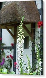Cottage Garden Foxglove Acrylic Print