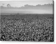 Cotton And Fog Acrylic Print by Michael Thomas