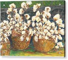 Cotton Basket Acrylic Print