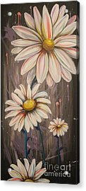 Cotton Candy Daisies Acrylic Print