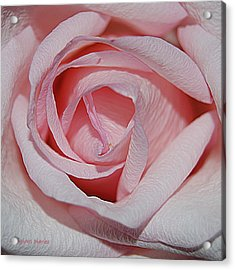 Cotton Candy Rose Acrylic Print by DigiArt Diaries by Vicky B Fuller