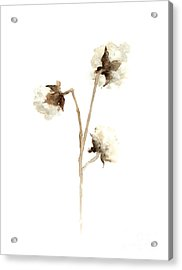 Cotton Fine Art Print Acrylic Print