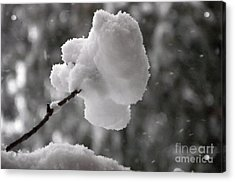 Cotton Snow Acrylic Print