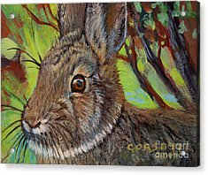 Cotton Tail Rabbit Acrylic Print