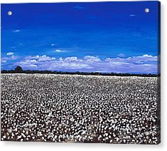 Cottonfields In Eastern Arkansas Acrylic Print by Cathy France