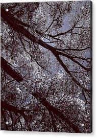 Cottonwood Energies Acrylic Print