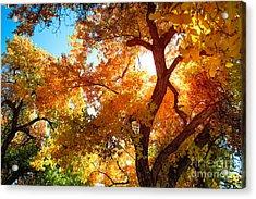Cottonwood Glow Acrylic Print