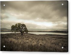 Cottonwood In October Acrylic Print