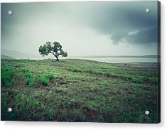 Acrylic Print featuring the photograph Cottonwood In October Storm by Alexander Kunz