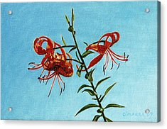 Cotttage Tiger Lilies Acrylic Print by Allan OMarra
