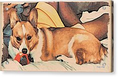 Acrylic Print featuring the digital art Couch Corgi Chewing A Ball by Kathy Kelly