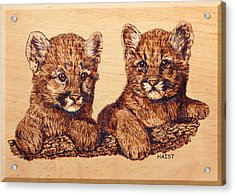 Acrylic Print featuring the pyrography Cougar Cubs by Ron Haist