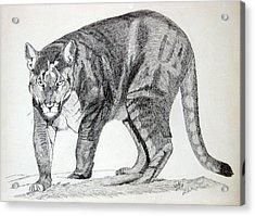 Cougar Acrylic Print by Daniel Shuford