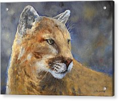 Cougar Acrylic Print by Debra Mickelson