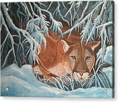 Cougar In Snow Acrylic Print by Nick Gustafson