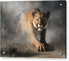 Cougar Is Gonna Get You Acrylic Print by Daniel Eskridge