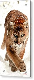 Acrylic Print featuring the painting Cougar In The Snow by James Shepherd