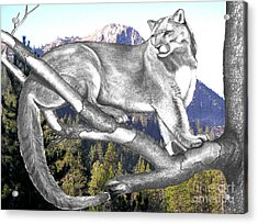 Cougar Mountain Acrylic Print by Russ  Smith