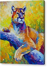 Cougar Portrait I Acrylic Print by Marion Rose