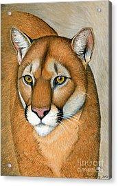Cougar Portrait Acrylic Print
