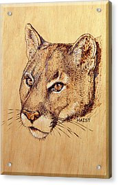 Acrylic Print featuring the pyrography Cougar by Ron Haist