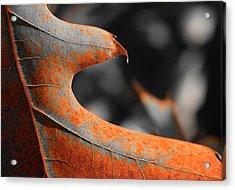 Cougar Rusty Leaf Detail Acrylic Print