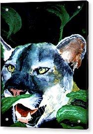 Cougar Acrylic Print by Stan Hamilton