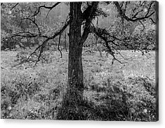 Coulee Oak Acrylic Print