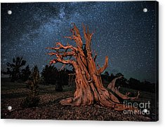 Countless Starry Nights Acrylic Print by Melany Sarafis