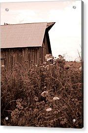 Country Barn Acrylic Print by Audrey Venute