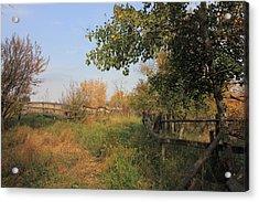 Country Lane Acrylic Print by Jim Sauchyn