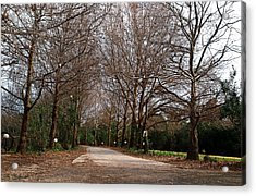 Country Road Acrylic Print by Arik Baltinester