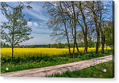 Country Road In The Rapeseed Field Acrylic Print