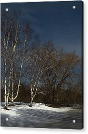 Country Roadside Birch Acrylic Print