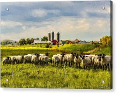 Country Sheep Acrylic Print