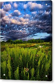 Country Strolling Acrylic Print by Phil Koch