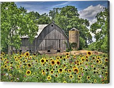 Country Sunflowers Acrylic Print by Lori Deiter