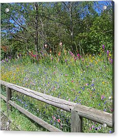 Country Wildflowers Acrylic Print by Angi Parks