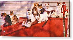 Countryside Cats Acrylic Print