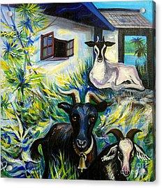 Countryside Of Jamaica Acrylic Print by Anna  Duyunova