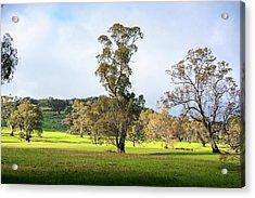 Countryside Victoria Australia Acrylic Print