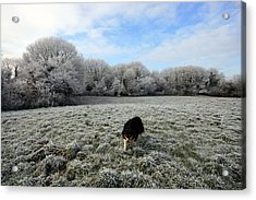 County Clare Lassie Acrylic Print by John Quinn