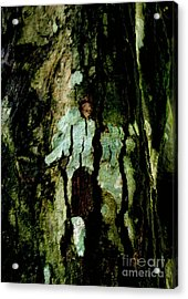Couple On A Tree Acrylic Print by Rushan Ruzaick