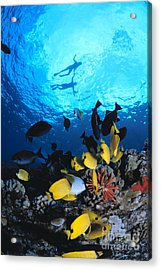 Couple Snorkels At Surfac Acrylic Print by Ed Robinson - Printscapes