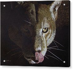 Cougar Night Acrylic Print by Kathie Miller